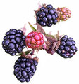 Img_blackberries_3